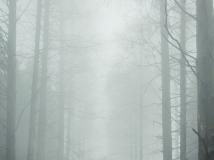 一个人的水杉林