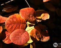 北京金秋——绚丽多彩之北宫国家森林公园(44)