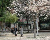 漫步在春天里.............