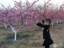 舞在桃花园