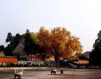夕阳下的香严寺