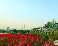 美丽镇平  赵河公园——月季园(17)