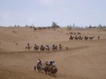 沙坡头驼队