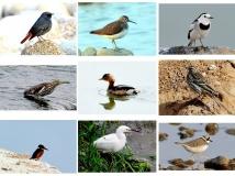 湿地水鸟(组照)