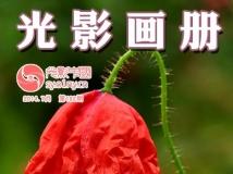 【每周一星】第6期 香山(郝红伟)摄影作品集电子画册