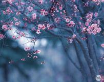 二月梅花淡淡香