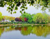 白龟湖里的风景