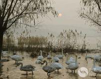 湿地晶灵3