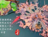 今日立冬(三)