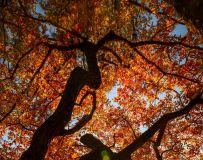 《树影婆娑》