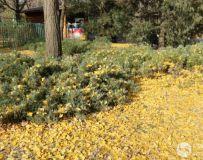 走进北京植物园 深秋一派好风光(33)