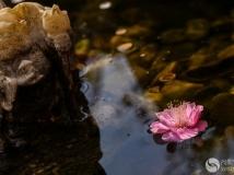 落花有意随流水