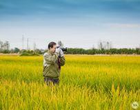 《田野里的摄影师》