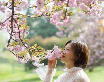 樱花的浪漫