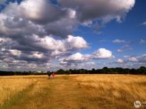 2014年第九期月赛:城市中的原野(组图)——拍摄于伦敦里士满公园