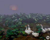 夕阳下的荷塘