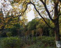 河滨公园之秋(7)