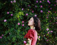 那一季的蔷薇