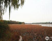 北京大运河森林公园(44)