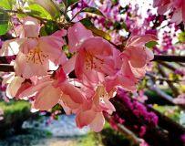 春来了!花开了.............