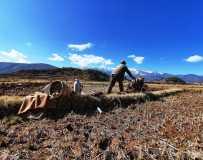 《雪山下耕地》(手机拍摄)