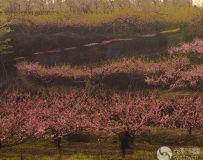 桃花园里彩带飘