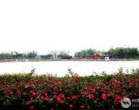 南阳世界月季大观园随拍(3)——东湖