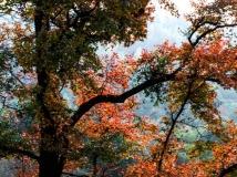风霜叶红它树绿,交相映秀深山中。