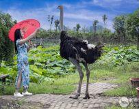 美女与鸵鸟