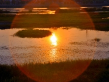 灌河湿地.2