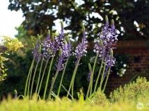 【2014年第四期月赛】养在深闺人未识——伦敦邱园的小花