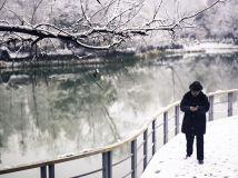 冬雪藏绿报春意
