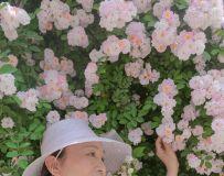 蔷薇花开(6)