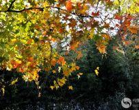 北京金秋——绚丽多彩之北宫国家森林公园(24)