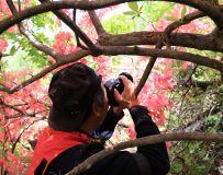 杜鹃花丛有美景