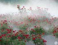 雾中点点红