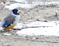 雪天一只鸟