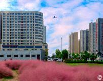 城市的风景——粉黛草(3)