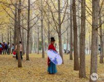 金秋北京奥森公园 红枫银杏彩叶飘飘(49)