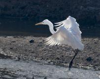 白鹤—准备降落