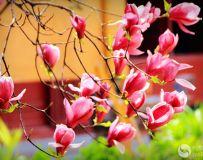 花红柳绿春满园【2】