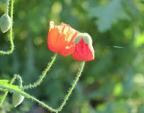 花卉随拍6