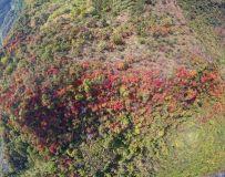 双叶红于二月花