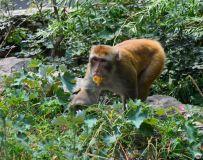贪吃的猴子