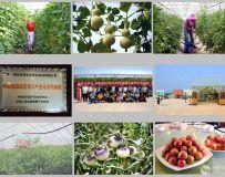 《科技引领现代农业》(组照)
