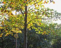 河滨公园之秋(2)