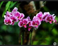 蝴蝶花 4