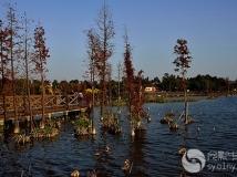 海珠湖风景