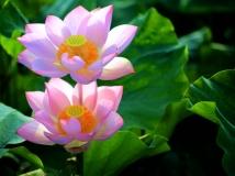 【2014第七期月赛】-----------花开盛世步步高