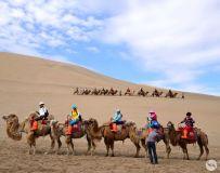 大漠驼铃(2)